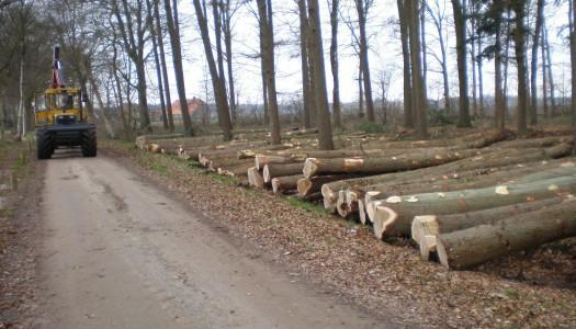 Bosbouw & boombouw