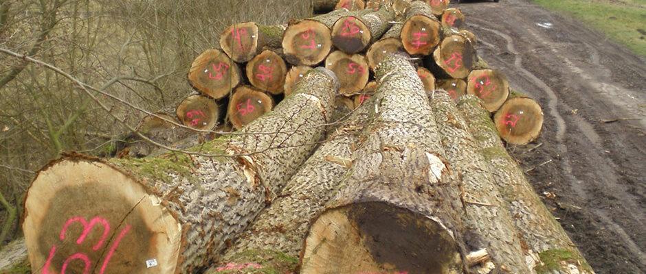 Zwaar hout