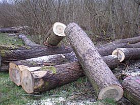 Brede blik op bosbouw