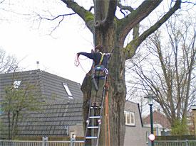 Het snoeien van een boom